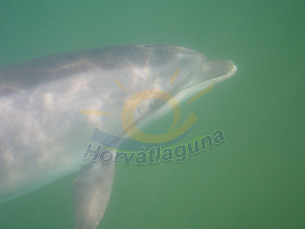 Delfin a Karini öbölben 2014-15-ben